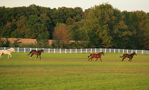 Good horse fencing keep horses and the public safe.