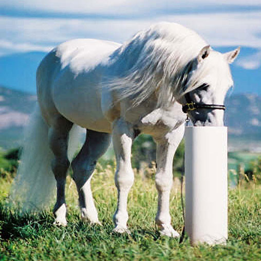 Automatic Horse Waterer