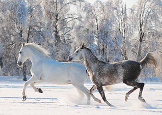 Winter Horse Blanket Tips