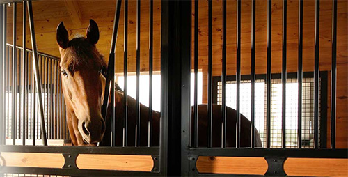 See the world through the eyes of your horse fopr safety!