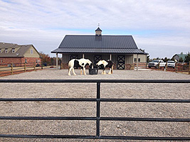 Small horse Property Management