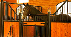 Horse Stalls from Ramm Fencing and Stalls
