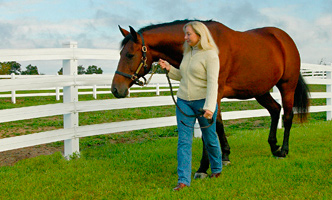 Horse Turnout for Good Horse Health