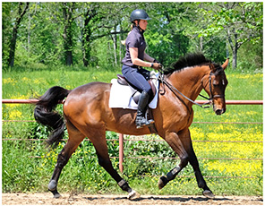 Relaxation and Suppleness in Horse Training
