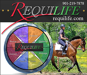 Horse Consultations by Requilife