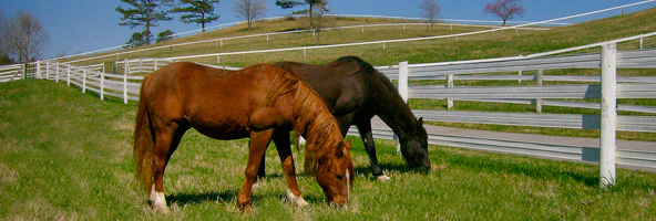 Using Fences to Keep Domestic Horses Safe!