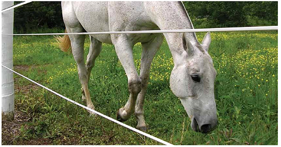HTP Line Horse Fencing