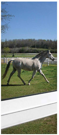 HTP Fencing is a safer Horse Fence