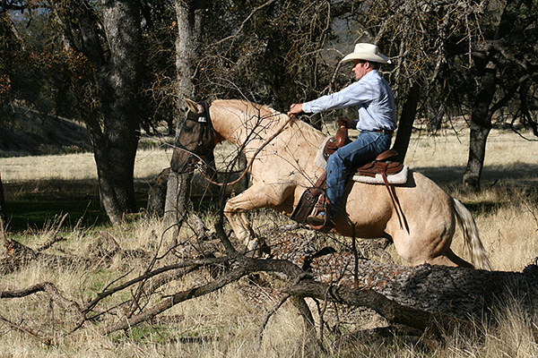 Jump a log  with a horse– no problem!