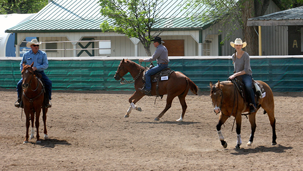 Practicing loping squares in the horse show warm-up pen