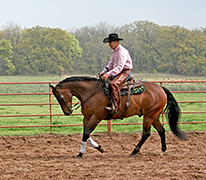 Executing the Canter Departure Horse Training