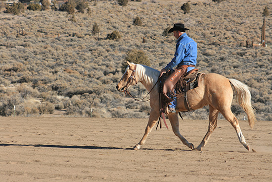 Your colt should travel relaxed on a loose rein.