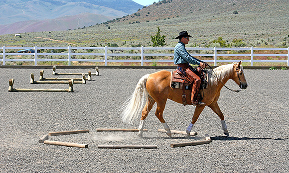 Take advantage of the octagon box and learn how to trot over poles.