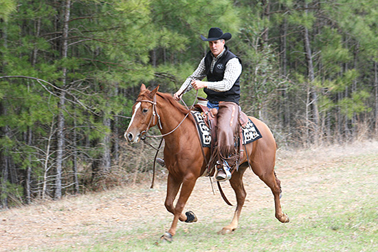 Letting my colt warm-up in an extended trot.