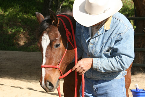 Teach your horse to accept the lead rope being put into his mouth.