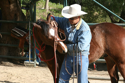 Place the bridle over the bridge of your horse's nose and bend his head.