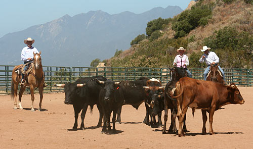 This couple receive instruction on proper cattle handling.