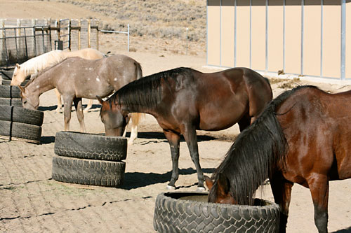 Horses feed peacefully with their own  hay mangers.