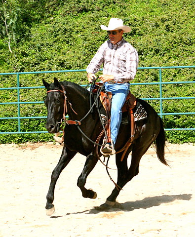 Ride – Consistent frequent loping will help this colt relax and smooth out over time.