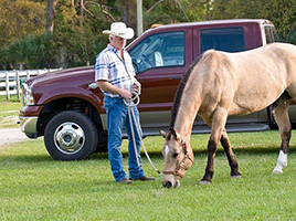 Horse grazing. Learn about the horse digestive system.