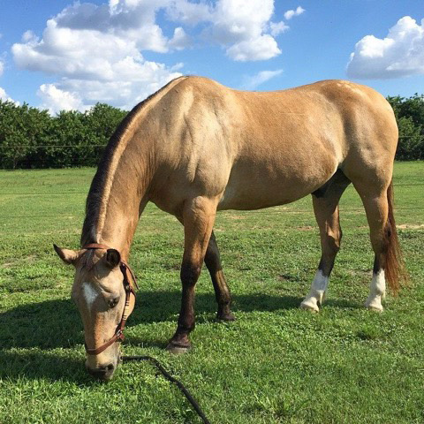 Understanding Your Horse's Digestive System