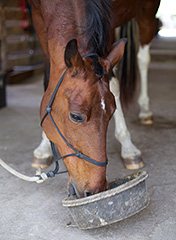 Horse Ulcer Prevention and Treatment