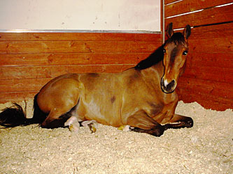 Horse laying down.