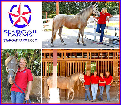 Stargait Farms Gaited Horses