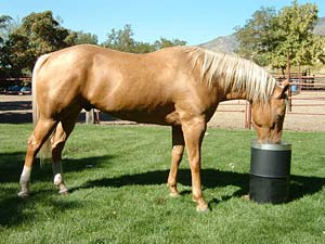 Automatic Horse Waterer by Bar Bar A