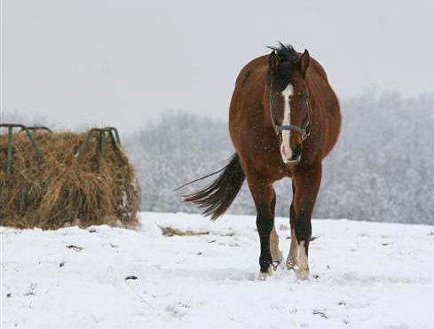 Cold weather horse feeding